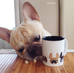 Another Five Little Frenchies - French Bulldog Coffee Mug - French Bulldog Love - 4