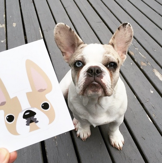 Honey Pied / Large French Bulldog Sticker - French Bulldog Love - 2