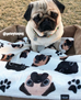 French Bulldog Love Pug Fleece Blanket