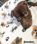 French Bulldog Love Pit Bull Fleece Blanket