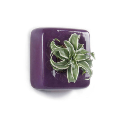 Square Wall Planter - Ceramic