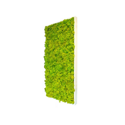 Reindeer Moss - Rectangle Large Wall Garden