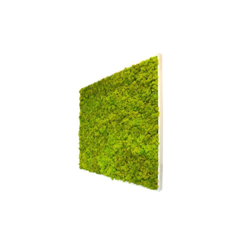 Reindeer Moss - Square X-Large Wall Garden