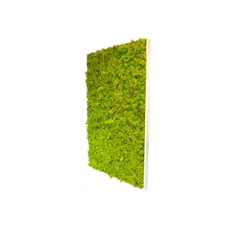 Reindeer Moss - Rectangle X-Large Wall Garden