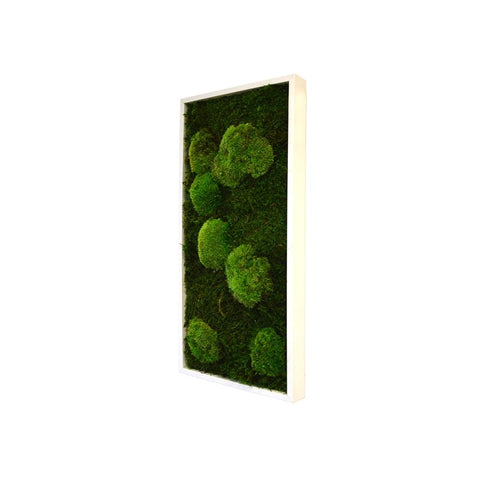 Bun Moss - Rectangle  Wall Garden