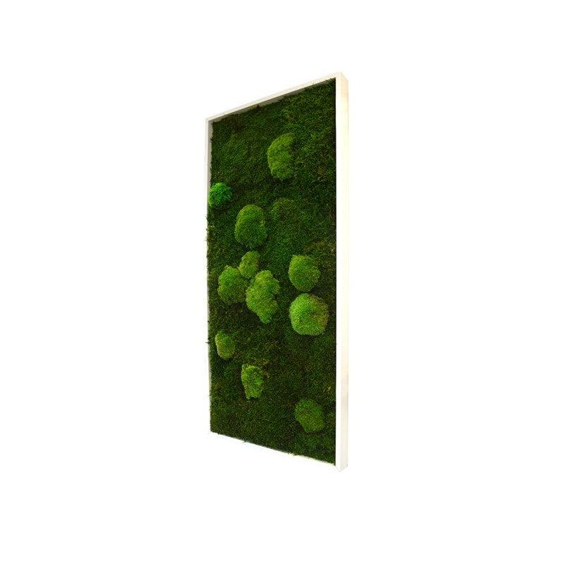 Bun Moss - Rectangle Large Wall Garden