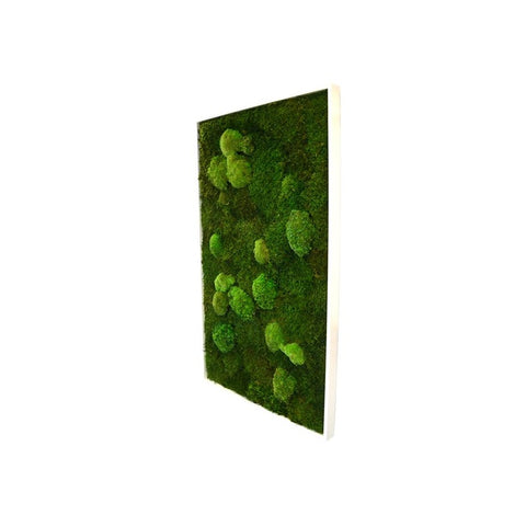 Bun Moss - Rectangle X-Large Wall Garden