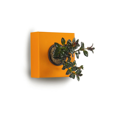 Square Wall Planter - Cardboard
