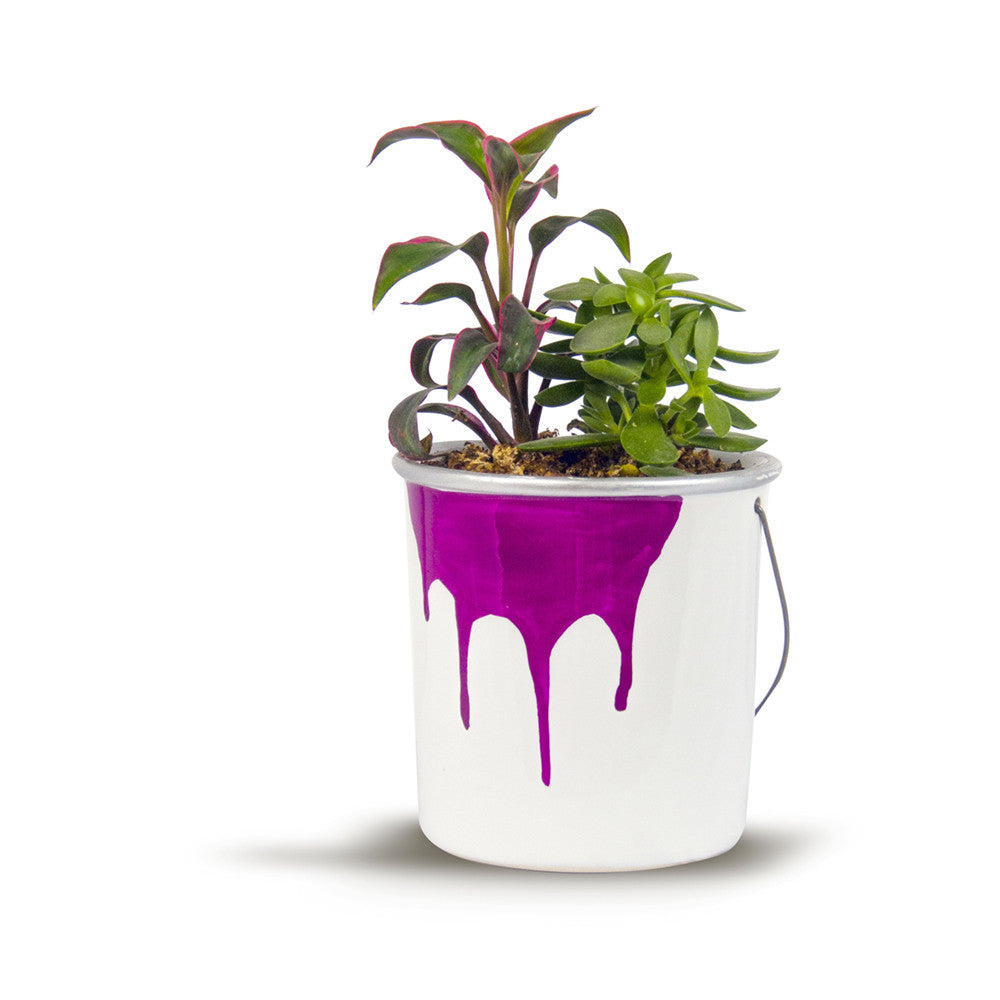 Flower Planter - Paint Bucket