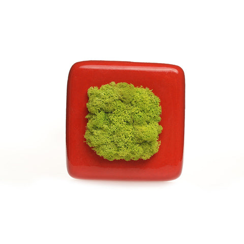 Reindeer Moss with Ceramic Square