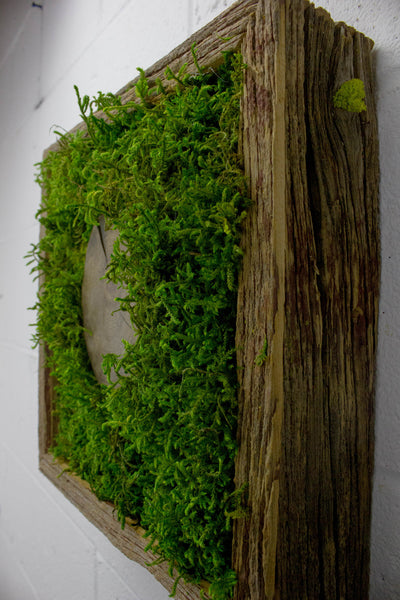 Tree Slice - Wall Garden