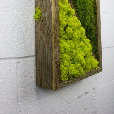 Diagonal - Wall Garden