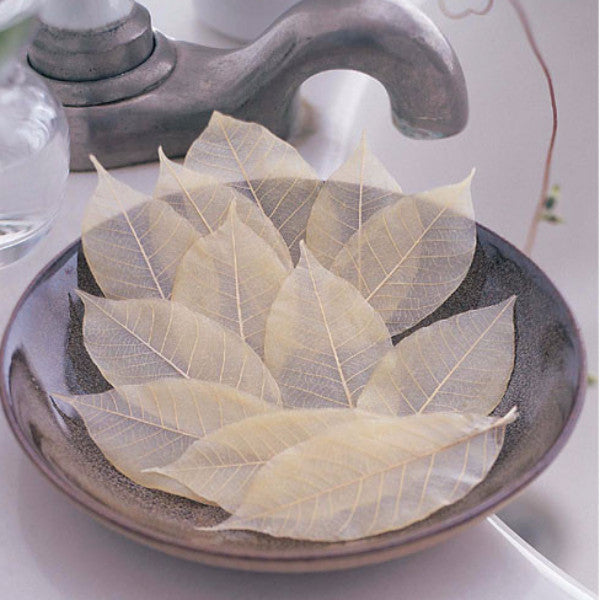 Design Ideas soap leaves ivory