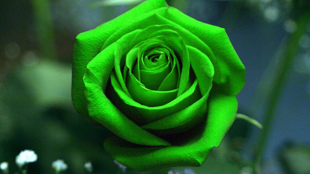 How Green is Your Red Rose?