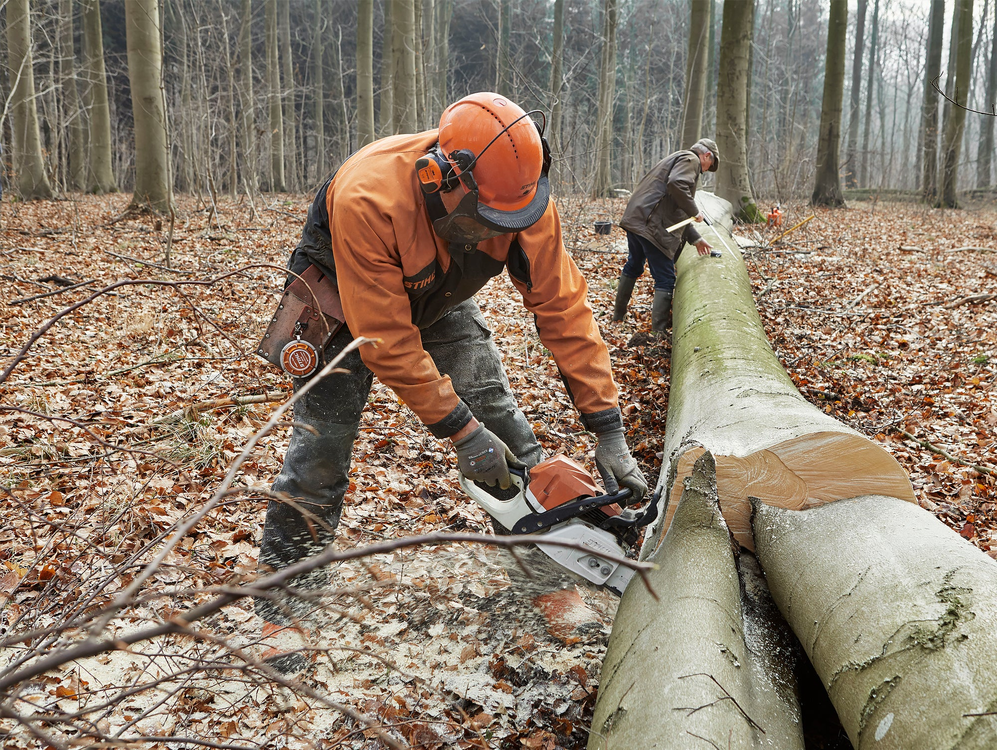 Choosing timber in the Damsbo Forest