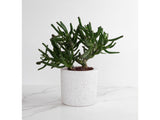 White Flecked, Medium Round Concrete Planter