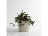 Classic Grey, Medium Round Concrete Planter