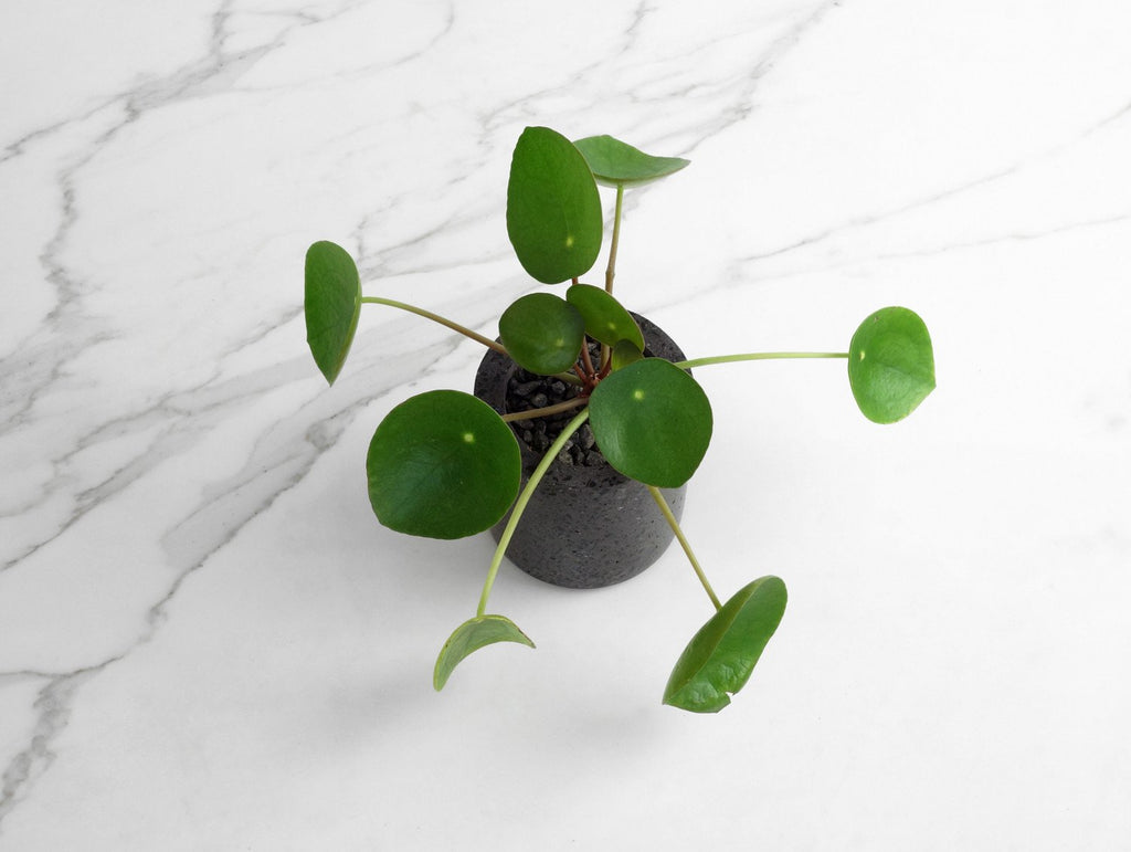 Small Round Concrete Planter By Conpot 183 Really Well Made