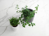 Medium Round Concrete Planter