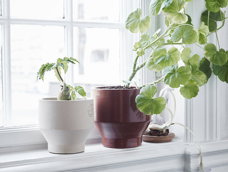 Indoor Edge Pots