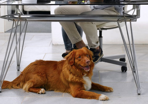 Why should you bring your dog to work?