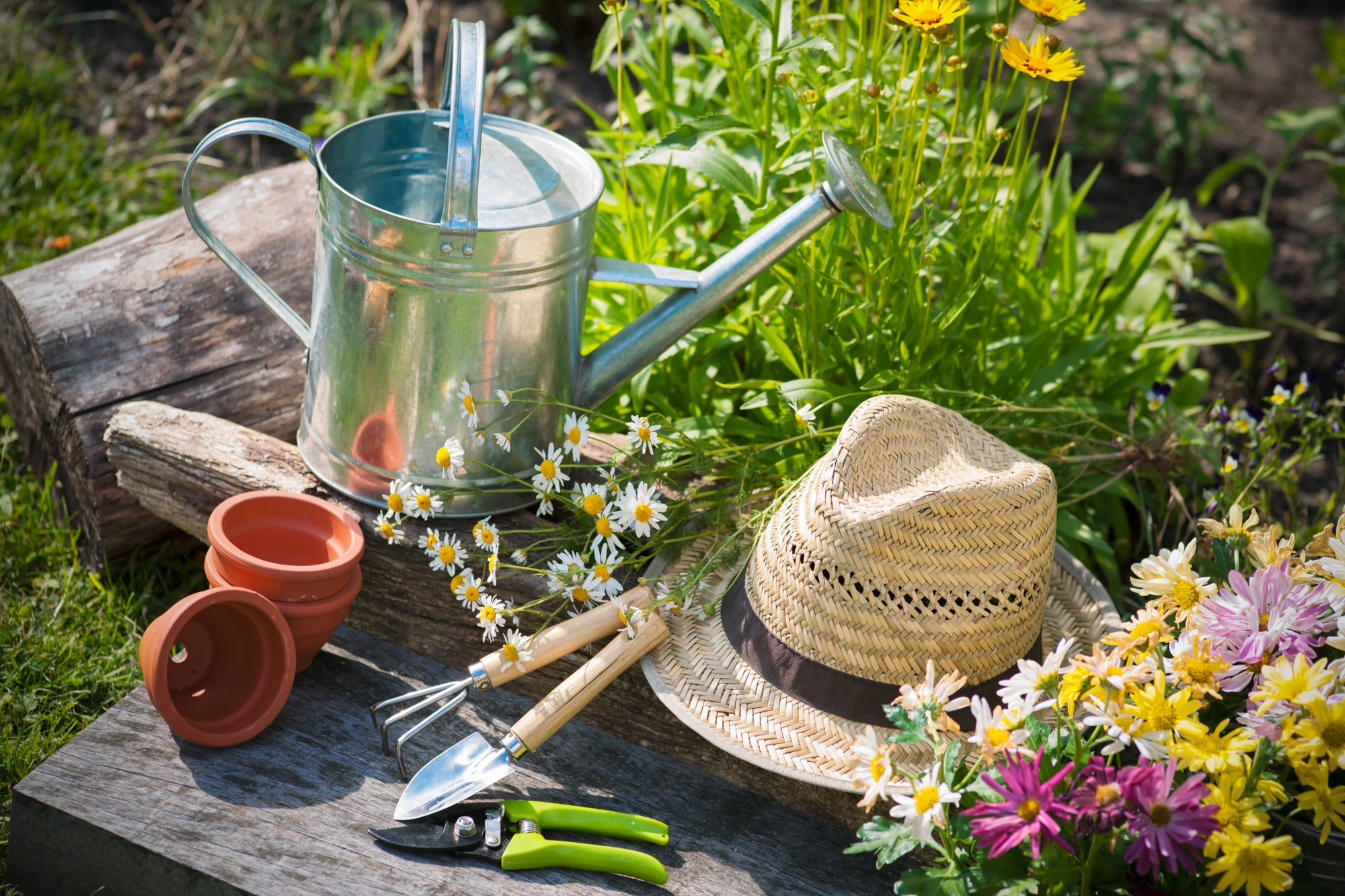 8 tips to save your garden through the summer heat waves