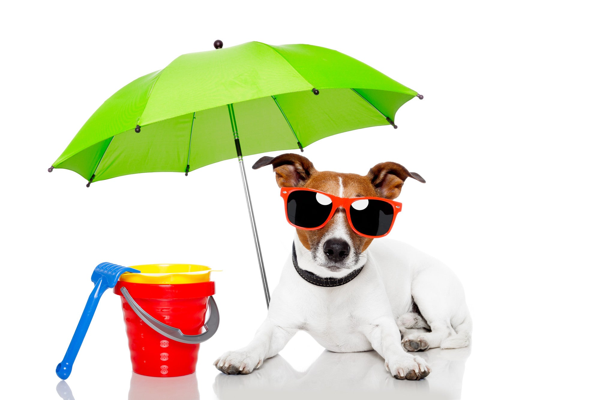 Keeping your dog cool in the scorching summer heat