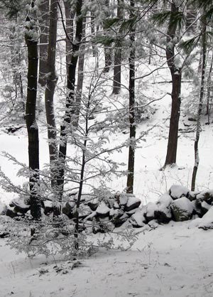 Picture of Woodland Snowfall