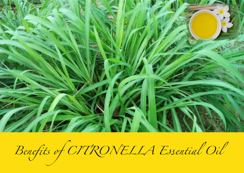 Benefits of using Citronella essential oil