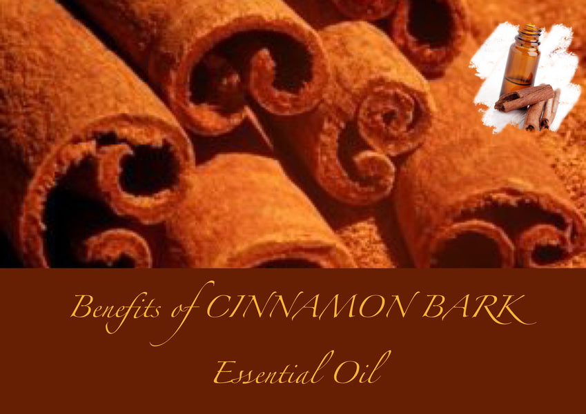 Benefits of Cinnamon Bark Essential Oil