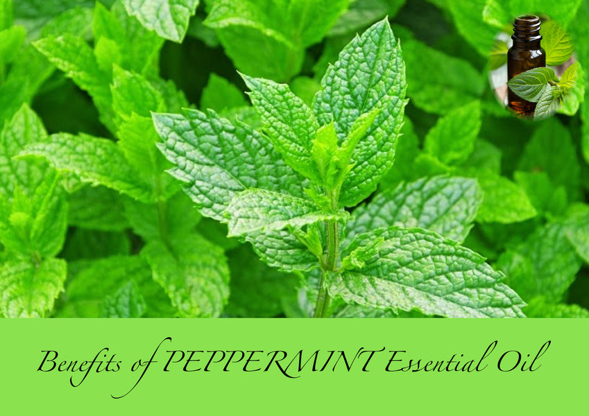Benefits of Peppermint Essential Oil