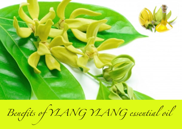Benefits of YLANG YLANG essential oil – New Life Spa