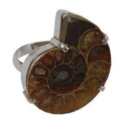 AMMONITE RING WITH PRONGS