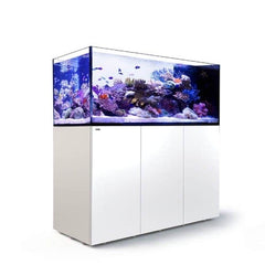 Red Sea Reefer Peninsula P650 White