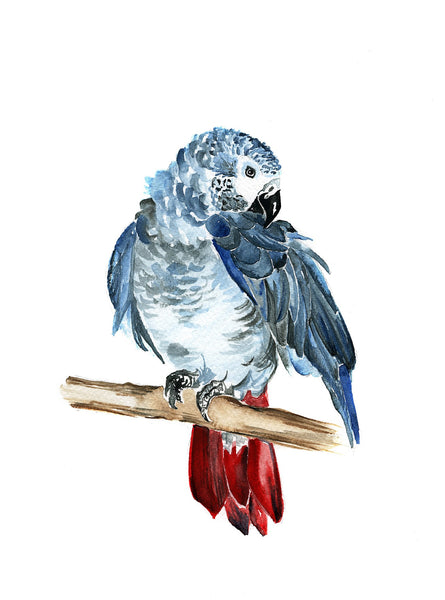 Watercolour - Blue Parrot