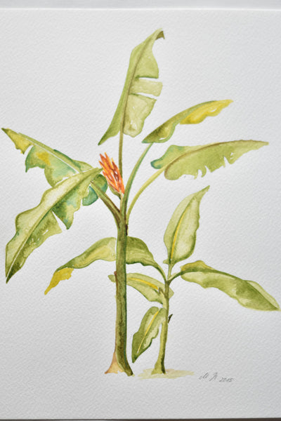 Watercolour - Banana Tree II