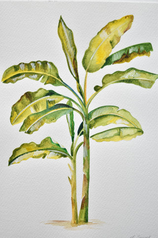 Watercolour - Banana Tree