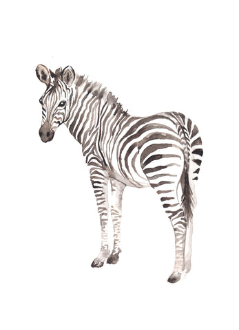 Watercolour - Zebra