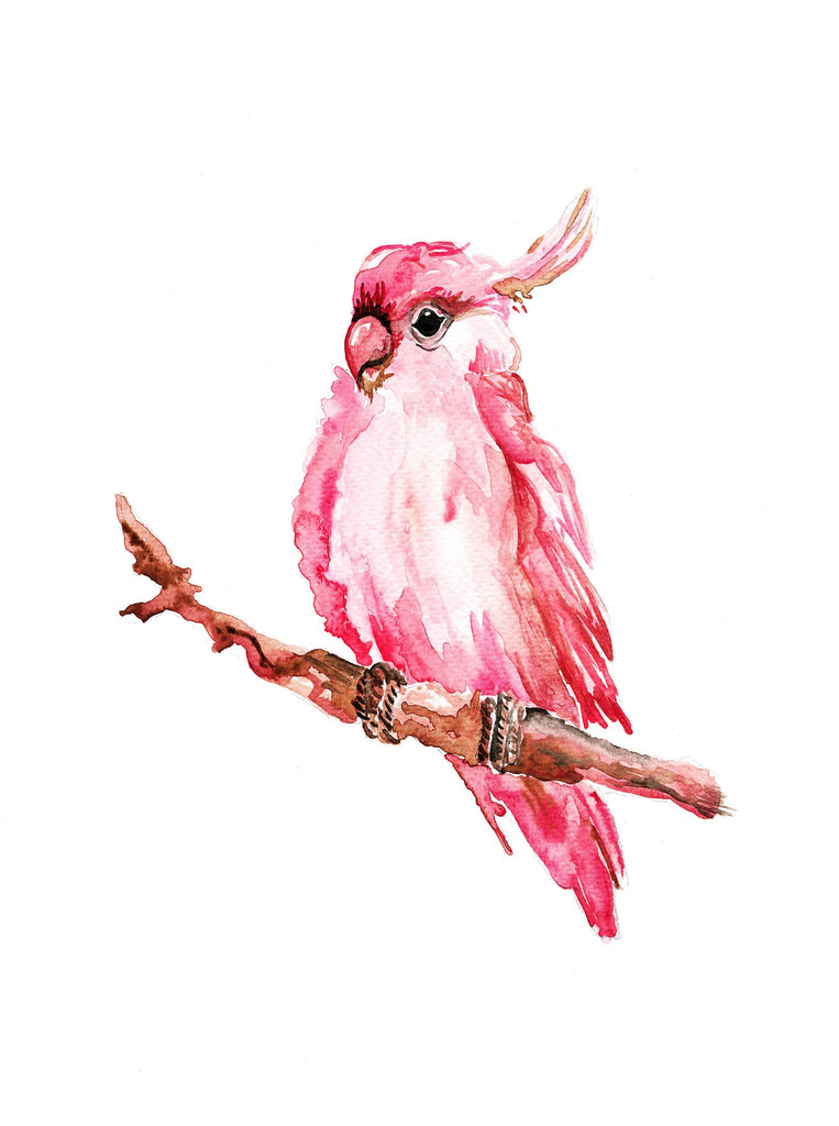 Watercolour - Pink Parrot