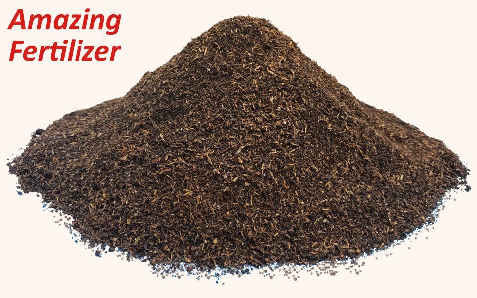 Nutritional Benefits of Black Soldier Fly Larva Frass - Critter Depot