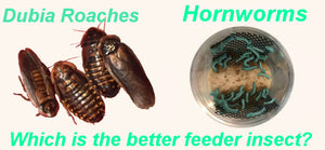 Dubia Roaches vs. Hornworms - Which is the Better Feeder Insect?