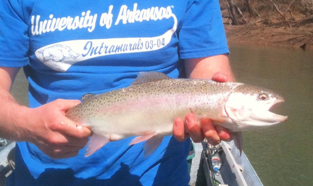 How to Catch Rainbow Trout - The Critter Depot