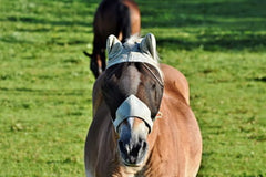 fly masks for horses