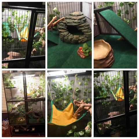 iguana habitat set up