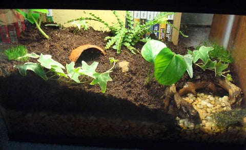 The Reptile Tank Buyer S Guide The Critter Depot