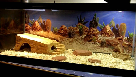 blue tongue skink tank size