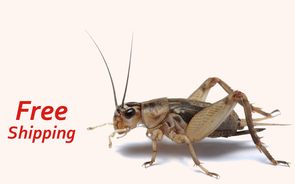 Crickets For Sale - Free Shipping
