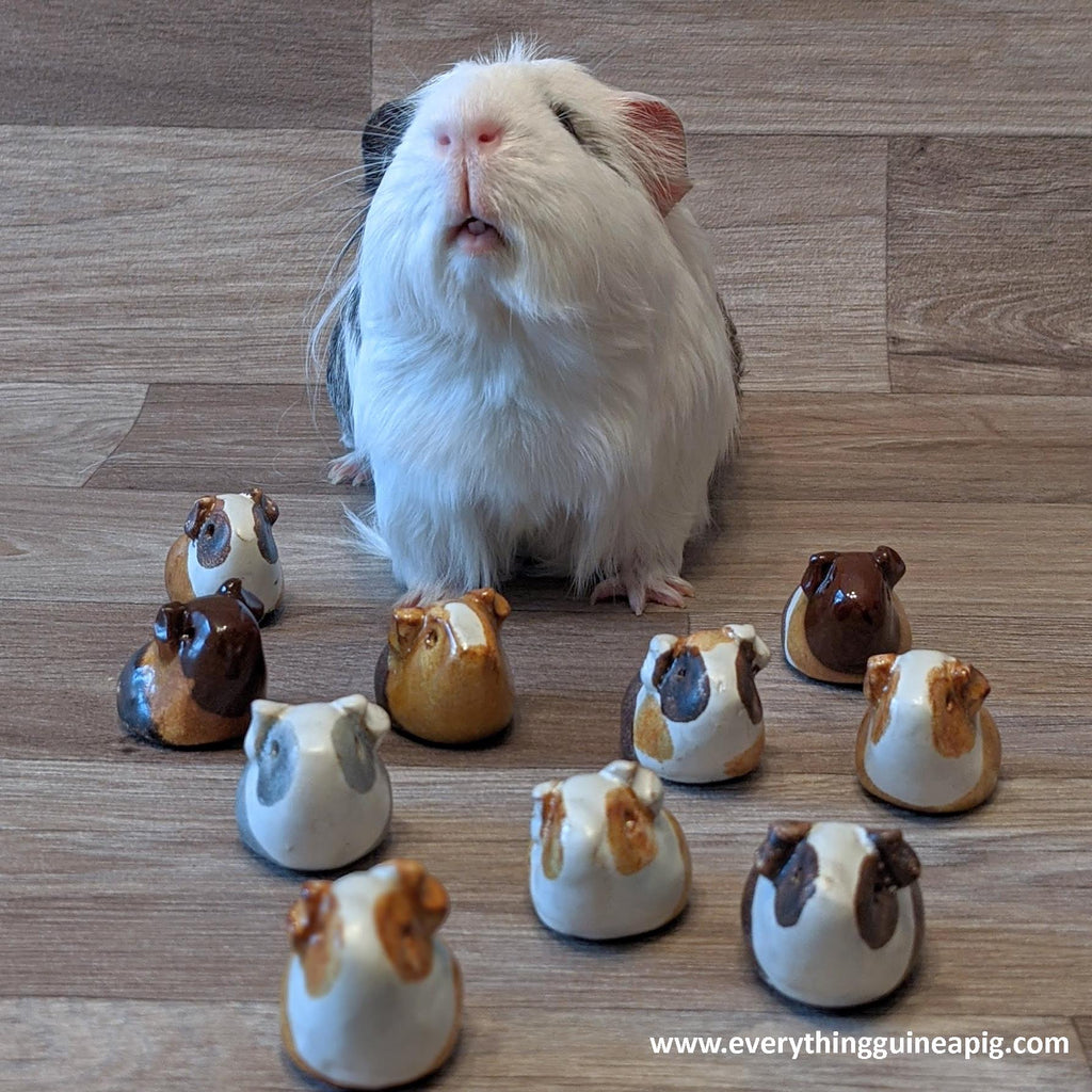 *BACK IN STOCK* - GUINEA PIG ORNAMENTS