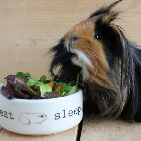 VITAMIN C AND GUINEA PIGS - EVERYTHING YOU NEED TO KNOW