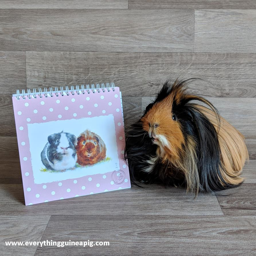 BACK TO SCHOOL....GUINEA PIG STYLE!